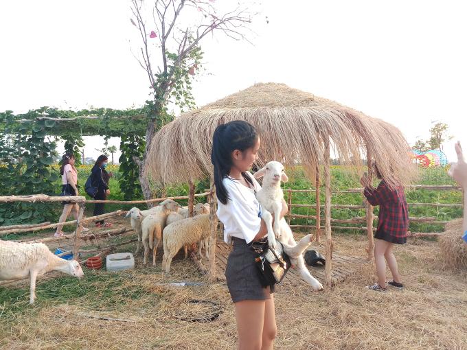 <p> Một trại cừu gần đó cũng là điểm check-in khó có thể bỏ qua.</p>