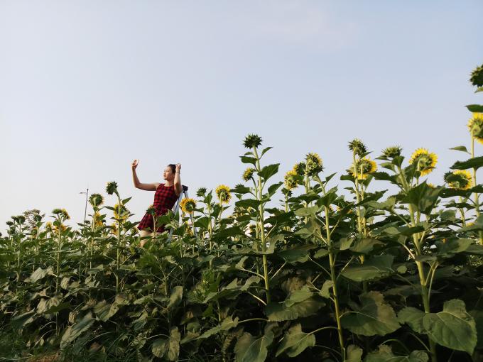 <p> Đứng ở góc nào, bạn cũng có thể chụp được ảnh với không gian cánh đồng hoa.</p>