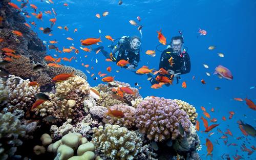 Trải nghiệm ngắm san hô tại Hòn Thơm.