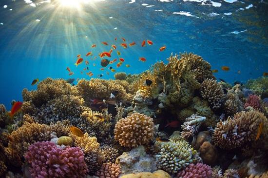 Đại dương bao la bạn biết gì về nó?