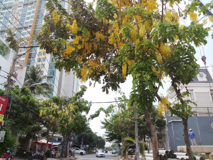 <p> Hoa tô điểm cho những con phố thêm phần rực rỡ.</p>