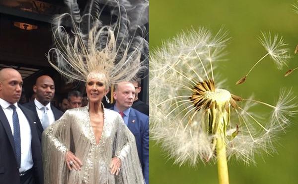 Mặc dù chiếc vương miện lông vũ của Celine Dion rất ấn tượng, netizen vẫn thấy đây là một diện mạo hài hước. Nữ diva được ví với... hoa bồ công anh - loài hoa luôn... vươn mình trong gió.