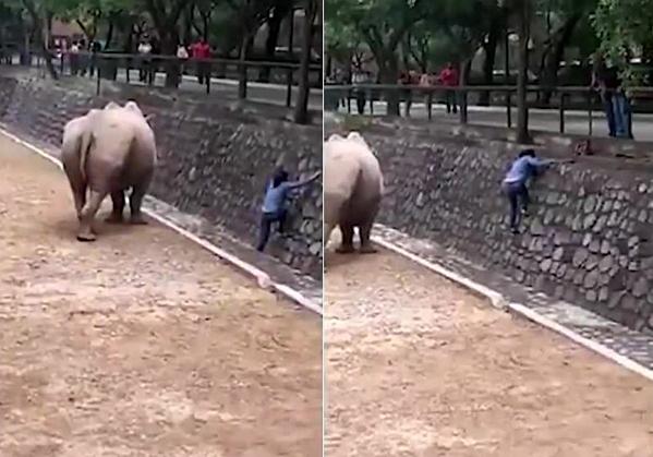 Khoảnh khắc cô gái loay hoay trèo ra khỏi chuồng tê giác.