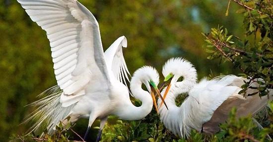 Hiểu biết từ vựng về các loài chim trong tiếng Anh - 4