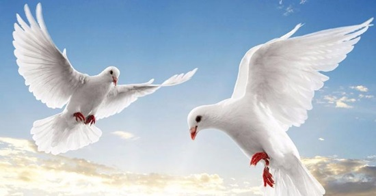 Hiểu biết từ vựng về các loài chim trong tiếng Anh - 7
