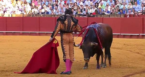 Morante de la Puebla mất nửa tiếng để tranh đấu với con vật.