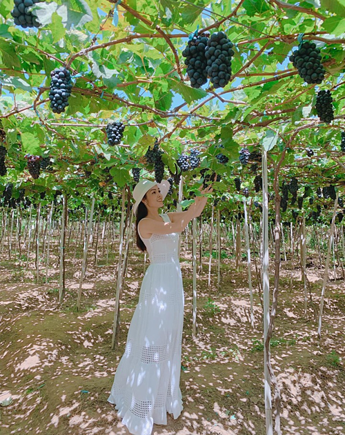 Dương Cẩm Lynh lạc vào vườn nho ở Ninh Thuận.
