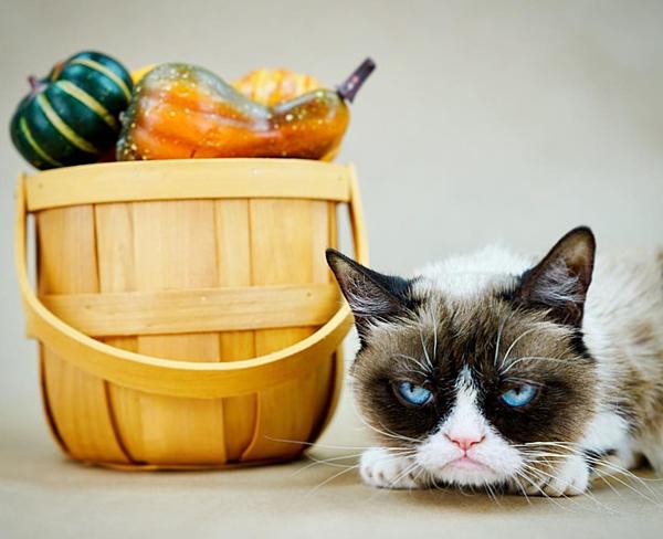 Mèo Grumpy với khuôn mặt dỗi hờn cả thế giới