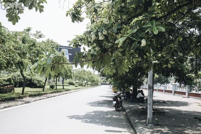 <p> Nhiều cây hoa sữa trên đường Trần Duy Hưng lác đác hoa.</p>