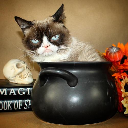 Mèo Grumpy với khuôn mặt dỗi hờn cả thế giới - 1