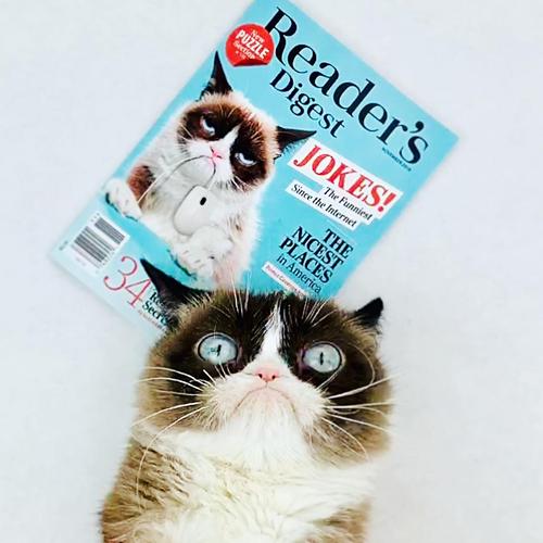 Mèo Grumpy với khuôn mặt dỗi hờn cả thế giới - 2