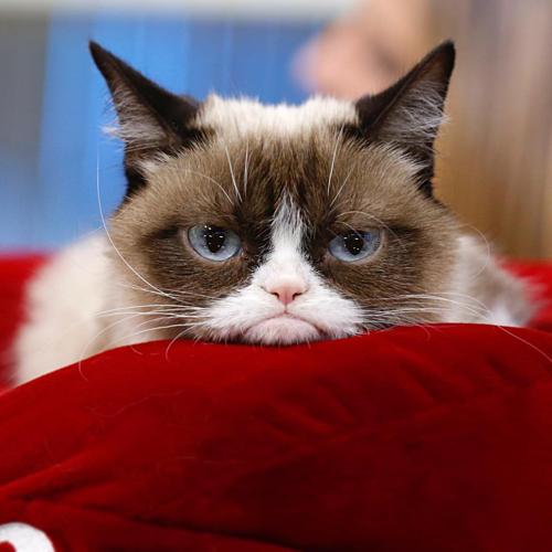 Mèo Grumpy với khuôn mặt dỗi hờn cả thế giới - 3
