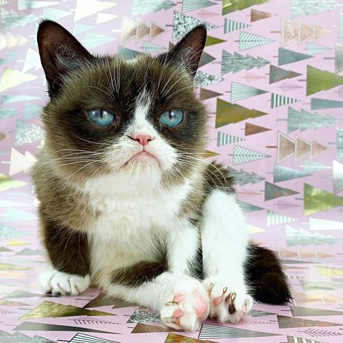 Mèo Grumpy với khuôn mặt dỗi hờn cả thế giới - 4