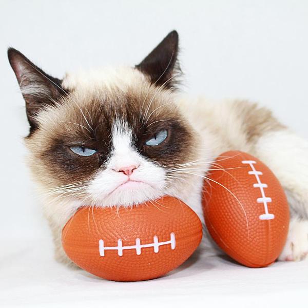 Grumpy Cat với khuôn mặt không đụng hàng.