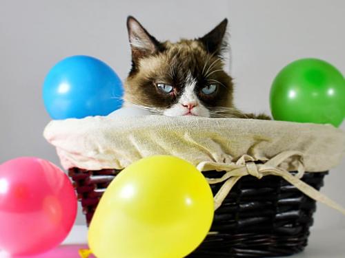 Mèo Grumpy với khuôn mặt dỗi hờn cả thế giới - 5
