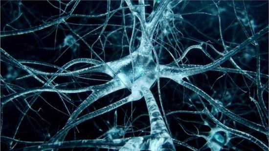 7 câu hỏi hại não về cơ thể con người - 6