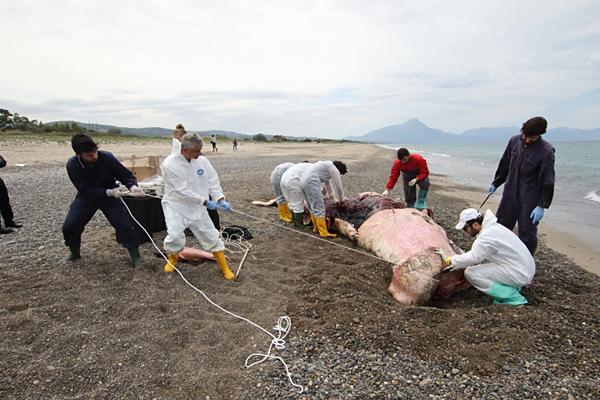 Các nhà nghiên cứu loại bỏ nhựa khỏi dạ dày của cá nhà tángở bờ biển
