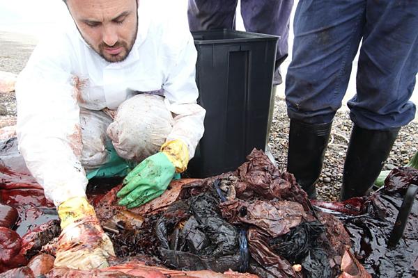 Con vật có vàikg chất thải nhựa trong dạ dày.