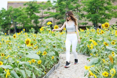 Cánh đồng hoa hướng dương vàng rực là nơi thích hợp cho các tín đồ sống ảo.