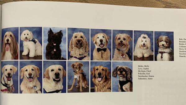 14 chú chó trị liệu được vinh danh trong cuốn kỷ yếu trường.