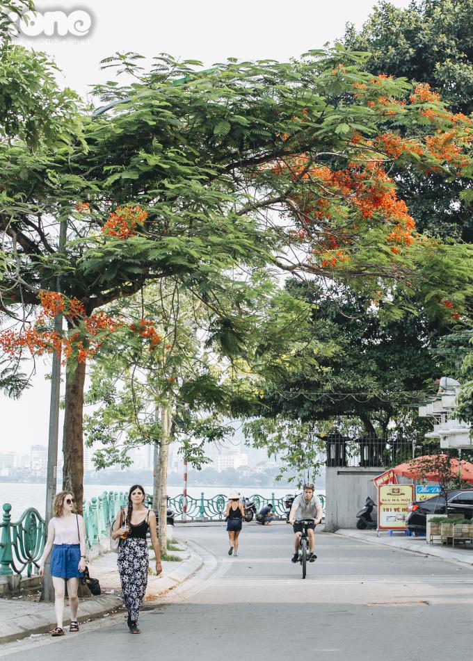 <p> Hà Nội có nhiều khu vực rợp hoa phượng. Loài hoa này nở đỏ rực vào mùa hè. Trong hình là dọc đường Trích Sài, ven Hồ Tây.</p>
