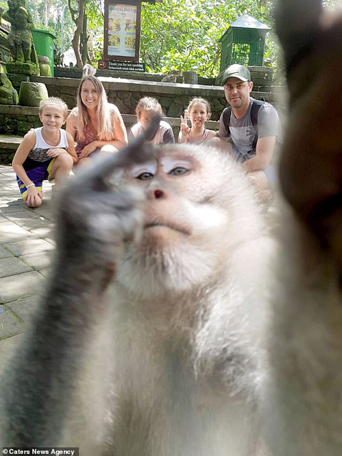 Khỉ giơ ngón tay thối chụp ảnh selfie cho người - 1