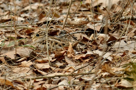 Thách bạn tìm ra con vật ngụy trang chỉ với 5 giây - 5