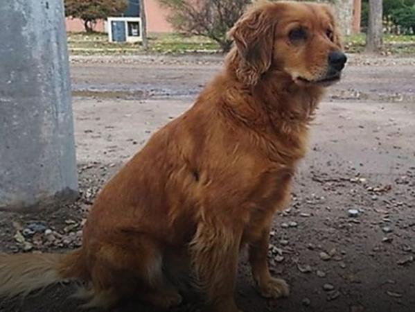 Sheila ngồi đợi chủ nhân ở đồn cảnh sát địa phương ở Buenos Aires, Argentina.