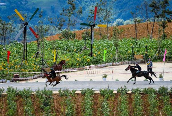 Các nài ngựa là những nông dân người Mông, Tày, Nùng và những chú ngựa thồ Tây Bắc đã cùng nhau tranh tài trên một cung đường đua lãng mạn, trang trí đầy hoa tươi...