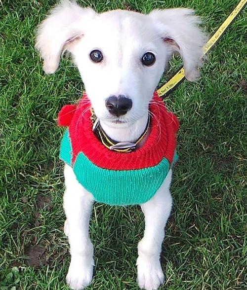 Cụ bà 89 tuổi đan 450 chiếc áo dành tặng chó - 1
