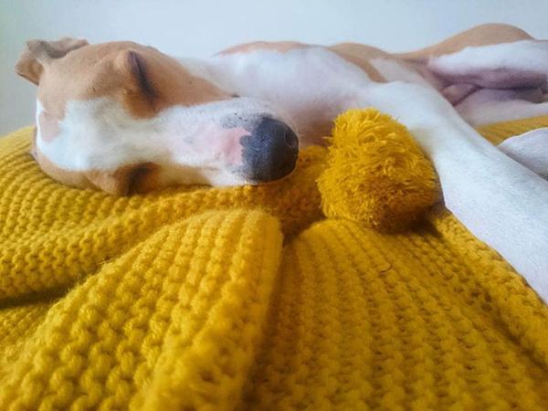 Cụ bà 89 tuổi đan 450 chiếc áo dành tặng chó - 5