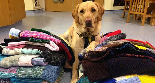 Cụ bà 89 tuổi đan 450 chiếc áo dành tặng chó - 2