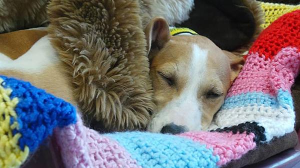 Cụ bà 89 tuổi đan 450 chiếc áo dành tặng chó - 3