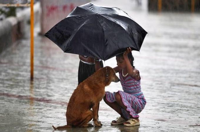 <p> Một bé gái che ô cho một chú chó đi lạc trong mưa lớn tại Mumbai, Ấn Độ.</p>