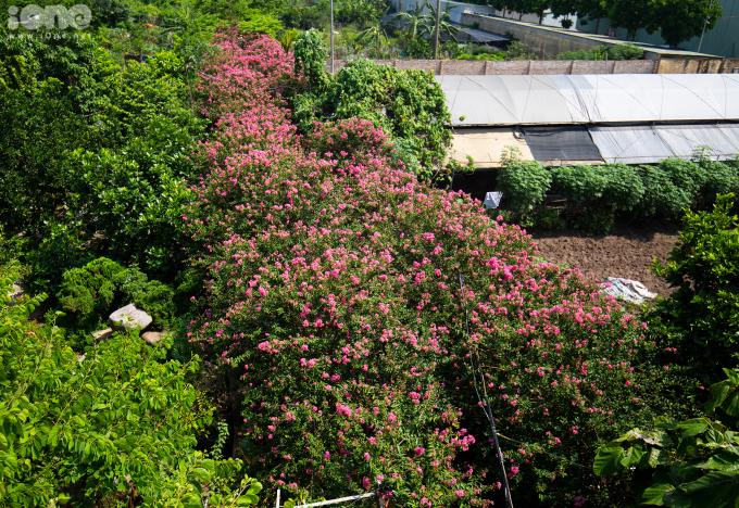 <p> Cách trung tâm Hà Nội khoảng 10km, con đường hoa tường vi ở xã Tam Hiệp (huyện Thanh Trì) là một trong những điểm đến được nhiều bạn trẻ yêu thích vào dịp cuối tuần.</p> <p> </p>