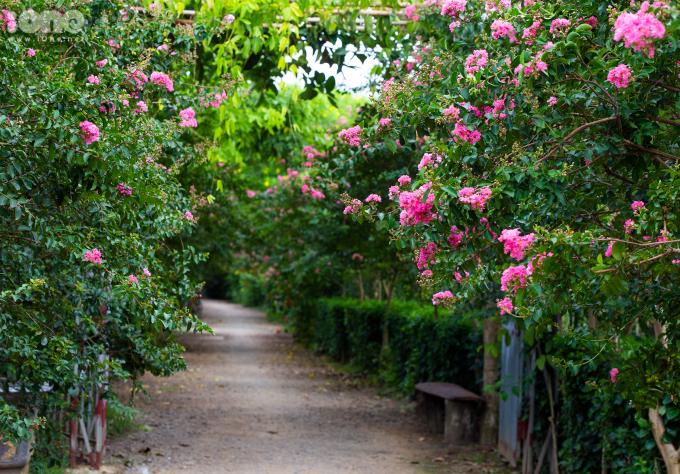 <p> Con đường hoa tường vi dài hơn 200m, được tạo nên bởi 100 gốc tường vi trải dọc hai bên đường. Mỗi gốc cây có tuổi đời từ 13 đến 15 năm.</p>