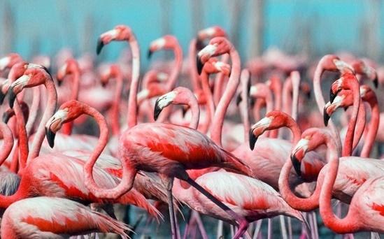 Những điều lý thú về động vật bạn đã biết chưa? - 1
