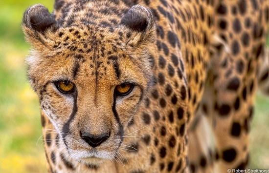 Những điều lý thú về động vật bạn đã biết chưa? - 4