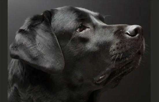 Đâu là chú cún con của giống chó này? - 12
