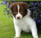 Đâu là chú cún con của giống chó này? - 15