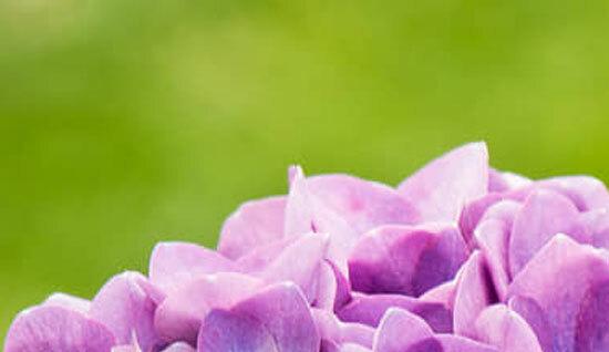 Đây là loài hoa nào? (2) - 2