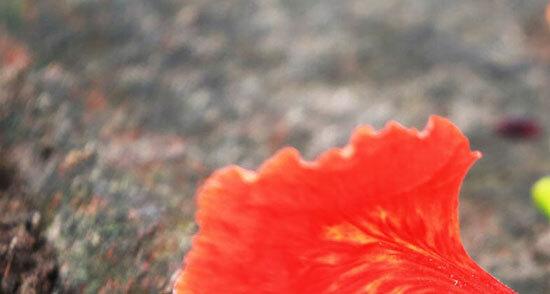 Đây là loài hoa nào? (2) - 4