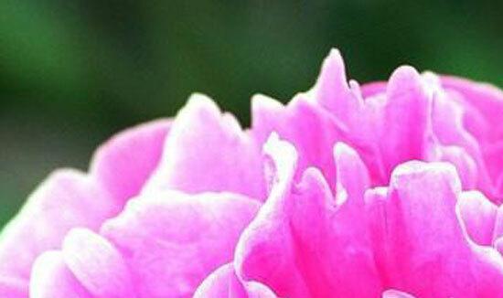 Đây là loài hoa nào? (2) - 8