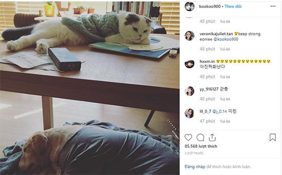 Goo Hye Sun không ly hôn vì Ahn Jae Hyun đòi giữ mèo cưng