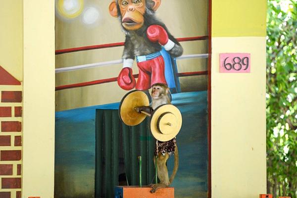 Khỉ biểu diễn nâng tạ. Ảnh: Khắc Nguyễn / AFP