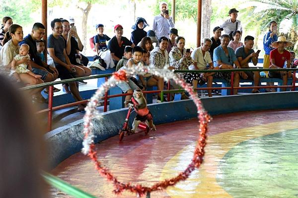 Đảo khỉ ở Nha Trang lên báo nước ngoài