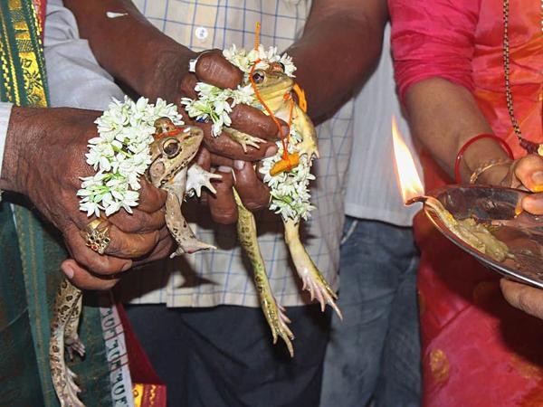 Bắt vợ chồng ếch ly hôn vì mưa quá nhiều - 1