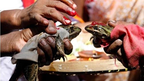 Bắt vợ chồng ếch ly hôn vì mưa quá nhiều - 2