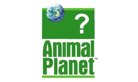 Tìm con vật mất tích trong các logo thương hiệu (2) - 5