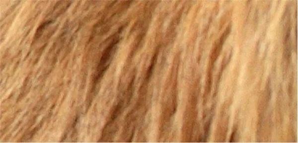 Nhìn lông đoán động vật - 4